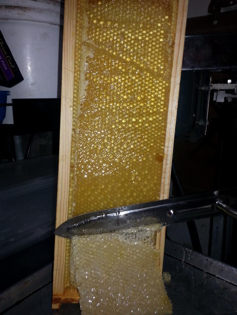 Completed uncapping of honey comb